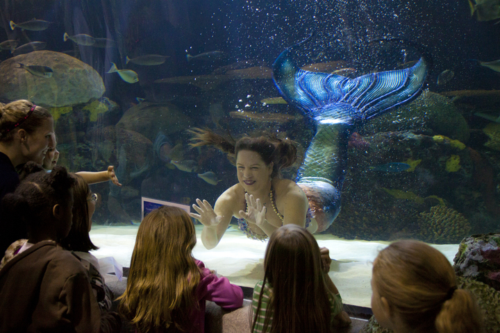 The Aquarium Will Be Open From 5 30 9 P M On April 6 13 20 And 27 To Give Reserved Ticketed Guests A Mermaid Themed Evening In Bay Ocean