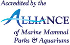 Virginia Aquarium Earns Accreditation by AMMPA