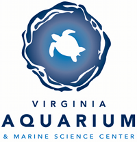 The Virginia Aquarium Hosts Dinosaurs! Exhibit June 14 - January 3, 2016