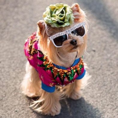 Fashion Has  Gone to the Dogs!