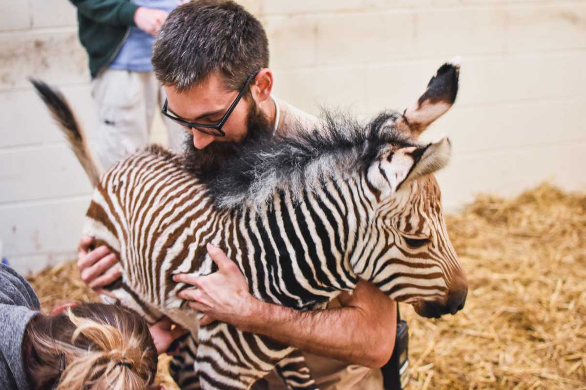 Zoo Welcomes Baby Zebra and Naming Help