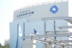 Virginia Aquarium Announces September Events