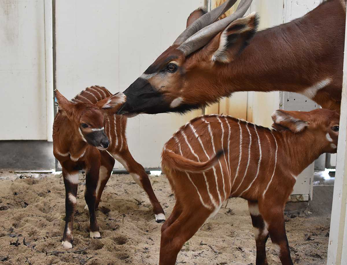 Christmas Brings Two Babies to the Virginia Zoo